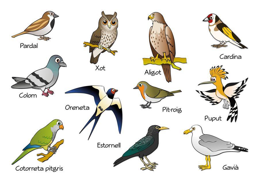 Ocells de l'entorn